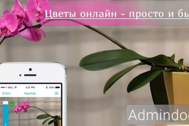 Admindoc-Preview-Flowers-online
